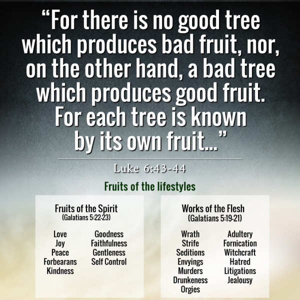 A tree is known by its fruits: meaning and reflection