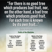 Each tree is known by its own fruit